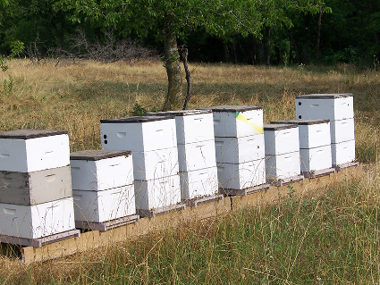 Into The Beehives at Gold Standard Honey