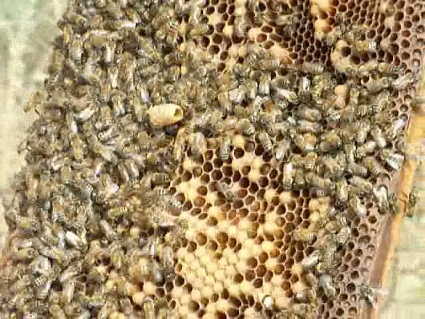 Bees, Bees and More Bees Equal Local Honey