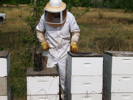 Conversations About Local Raw Honey