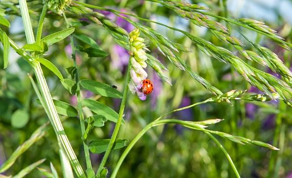 lady-bug-4858600