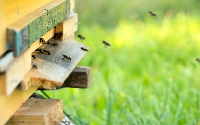 Beekeeping: Springtime Challenges and Joys